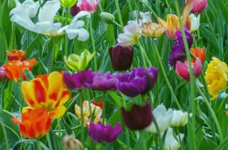 enfermedades de la primavera