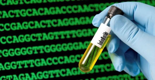 Causas genéticas de las diferencias entre individuos