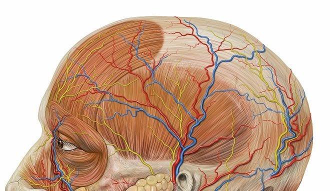 Crean cerebros humanos a partir de células madre