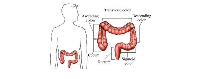 Digestión, colon