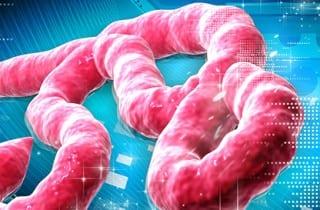 Ébola: virus