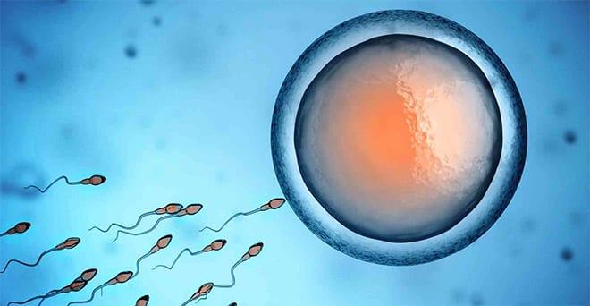 fecundacion in vitro. Indicaciones