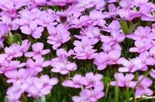 Flores de bach te dan equilibrio emocional