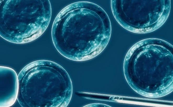 huesos hechos de celulas madre
