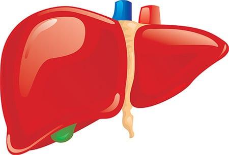Limpieza hígado