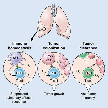oxigeno y cancer