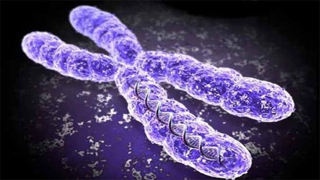 Tratamientos naturales antienvejecimiento. Telómeros